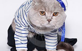Первый кот путешественник обогнувший Австралию