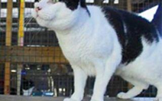 Кот Иуда ищет хозяев