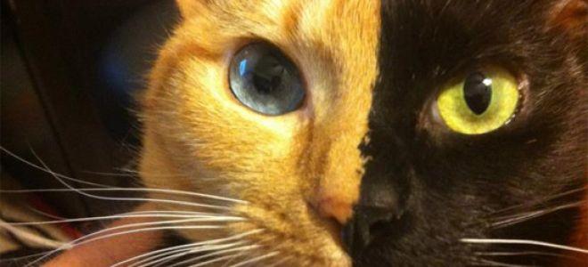 Фото кошки Венеры