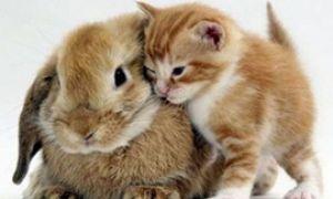 Кот и кролик у вас в доме