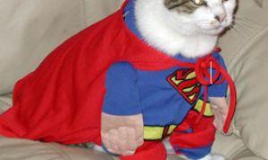 Домашние кошки спасают мир