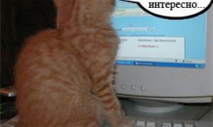 Милые кошки и компьютер