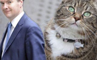 Кот Ларри затевает драку
