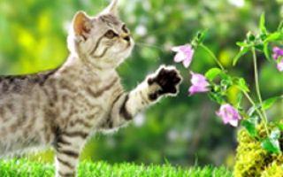 Кошка и запахи