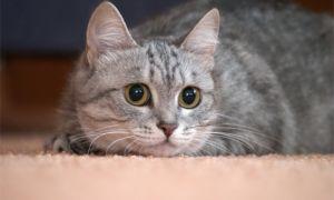 Милые кошки и их праздник