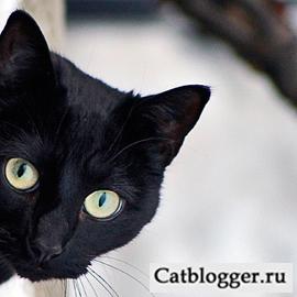 Статья о кошке