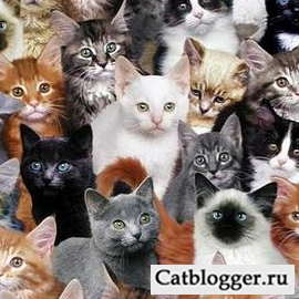 разные виды кошек в мире