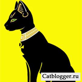 кошка в Египте