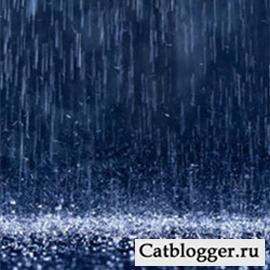 кошки и погода