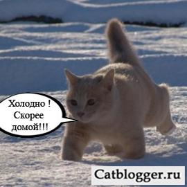 milye-koshki-zimoj