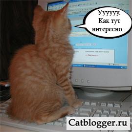 milye-koshki-i-kompyuter