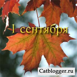 na-bloge-lyubitelej-kotov-i-koshek-1-sentyabrya