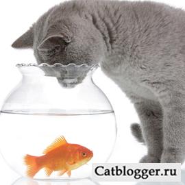 v-racion-koshki-dobavlyaem-rybu