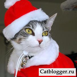 blog-lyubitelej-kotov-i-koshek-pozdravlyaet-vas-druzya