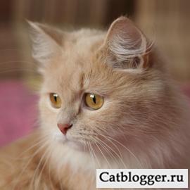 zamechatelnye-koshki-i-sobaki-zhdut-vashej-dobroty