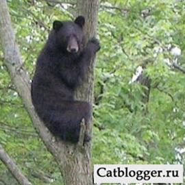 domashnij-kot-dzhek-i-medved