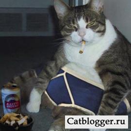 domashnyaya-koshka-i-tabachnyj-dym-chast-2