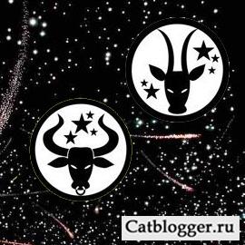 goroskop-i-moj-domashnij-kot-chast-1