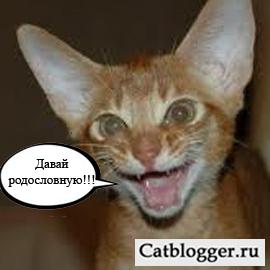 malenkij-kotenok-i-rodoslovnaya-chast-2