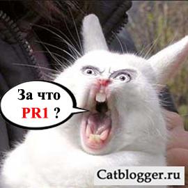 blog-lyubitelej-kotov-i-koshek-1