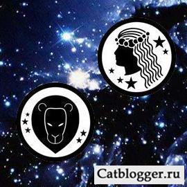 goroskop-i-moj-domashnij-kot-chast-3