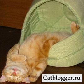 put-malenkogo-kotenka-k-veterinaru-chast-1