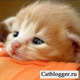Часть 2. Маленький котенок к ветеринару