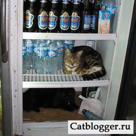 Жара и ваш любимый кот