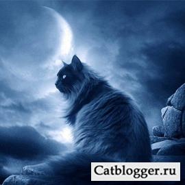 Кто ближе котенок или щенок