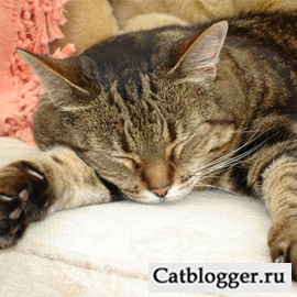 спит кошка
