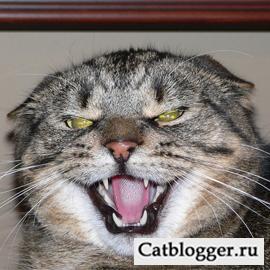 напала кошка
