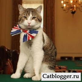 английский кот