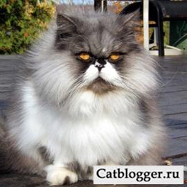 Шерсть кошки