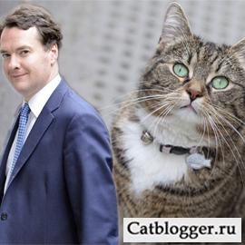 кот Ларри