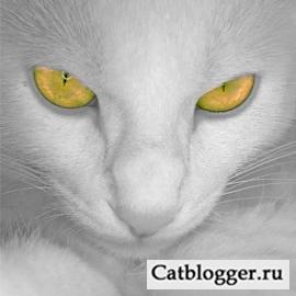 зрение у кошки