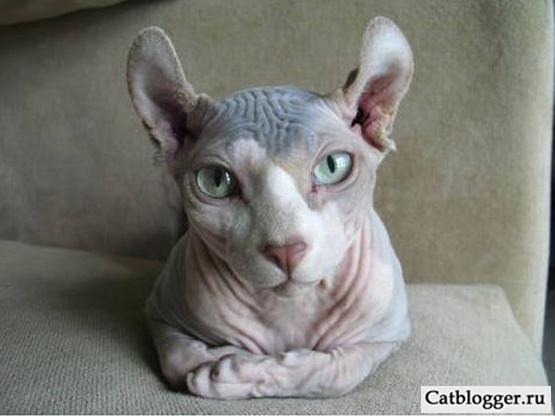 редкие кошки