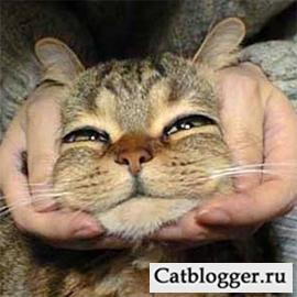 у кошки рвота