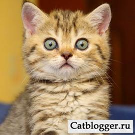 кошка и новое