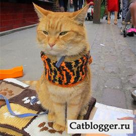 кот Боб