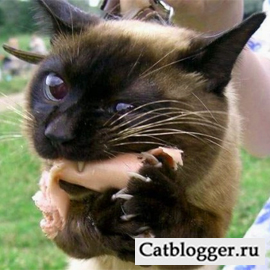 кошка и мясо