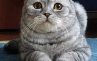 Почему простуда у кошки?