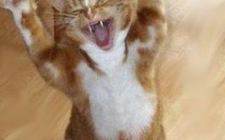 Мой блог любителей котов и кошек вернулся