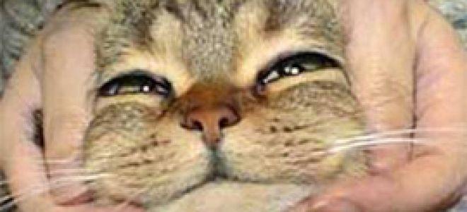Не стоит пугаться, если у кошки рвота