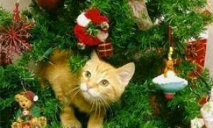 Кот и елка на Новый год
