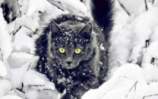 Готовим кошке правильное питание зимой