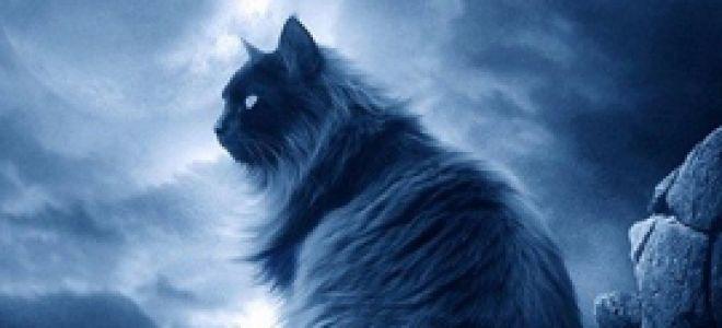 Кто ближе котенок или щенок?