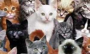 В мире есть разные виды кошек