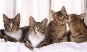 Когда в доме очень много кошек