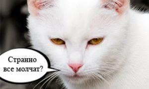 Наш любимый белый кот