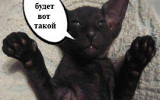 Блог любителей котов и кошек набирает PR1